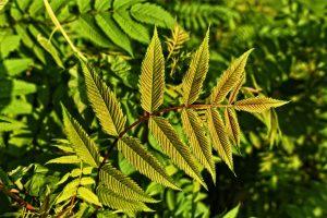 plant-twigs