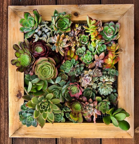completed succulent picture frame art planter